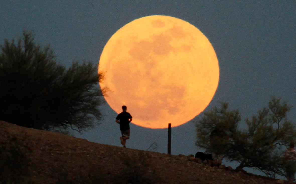 канадцы воют на луну вой на луну отвратительные мужики disgusting men
