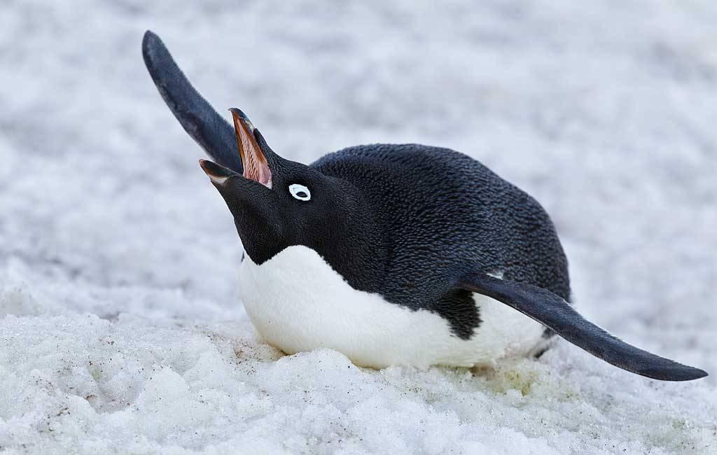 веселящий газ пингвины понедельник начинается с дичи отвратительные мужики disgusting men