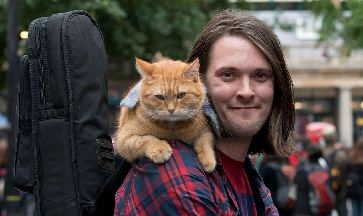 кот боб умер кот по имени боб