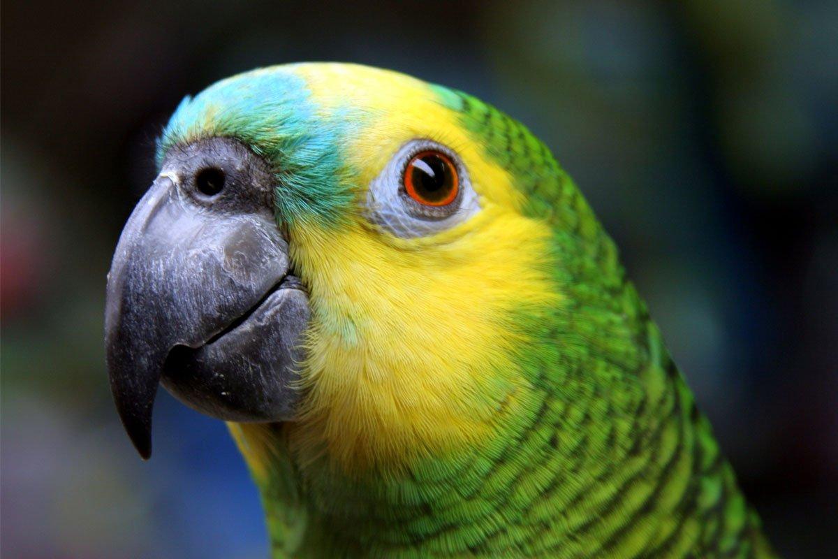 какие животные пердят пердящие животные тест пердит ли животное отвратительные мужики