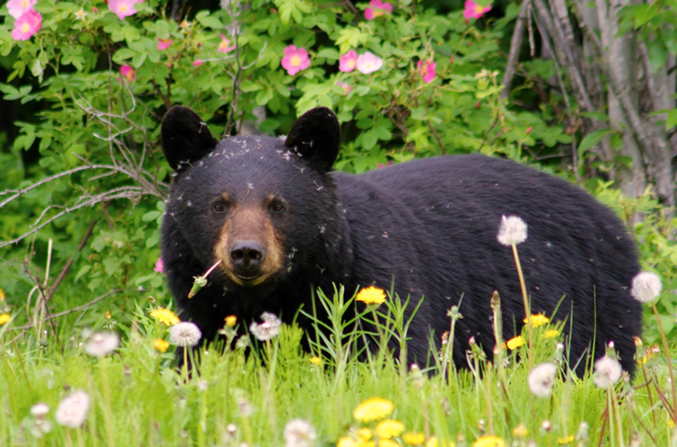 спасение медведя отвратительные мужики