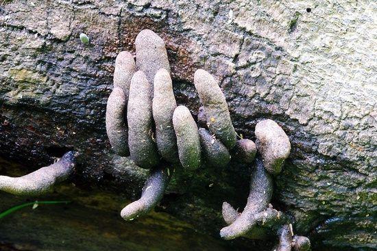 гриб пальцы мертвеца отвратительные мужики