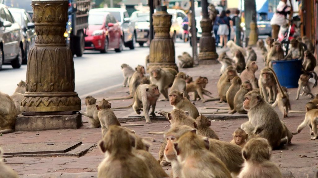 город обезьян лопбури таиланд макаки отвратительные мужики