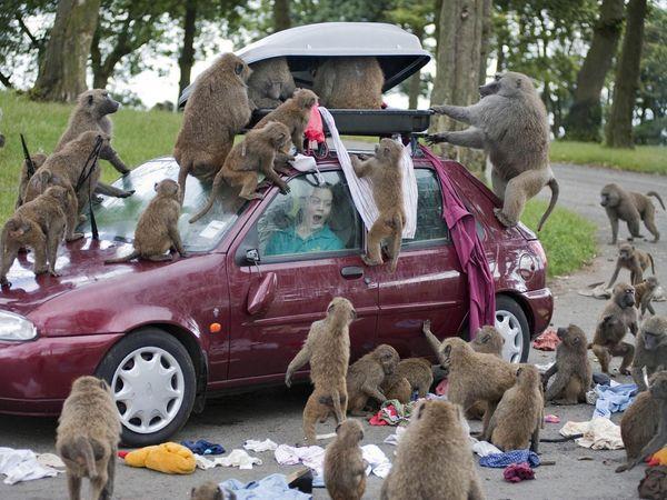 вооруженные обезьяны обезьяна с ножом понедельник начинается с дичи