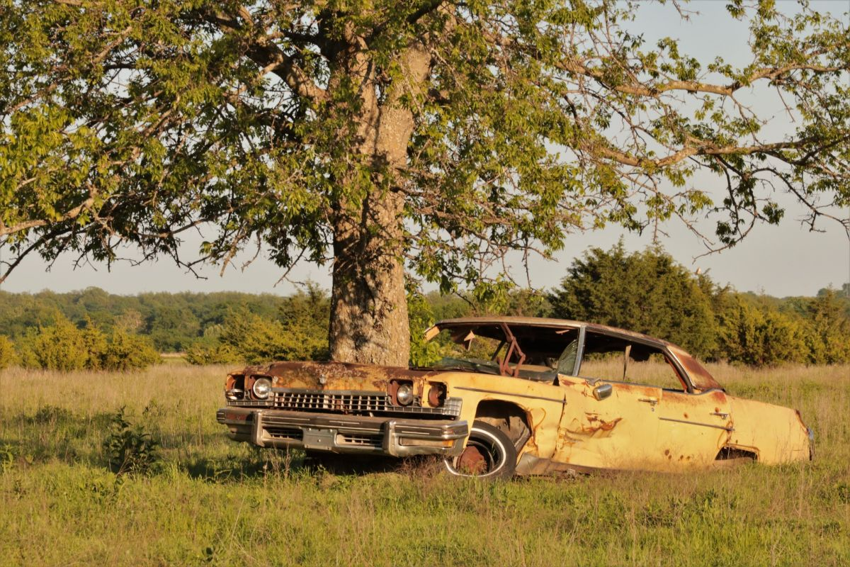 старинные машины заброшенные машины через которые растут деревья отвратительные мужики