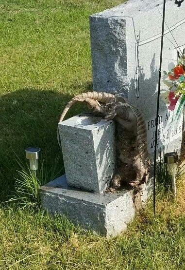 дохлые животные безумный дед осквернитель могил отвратительные мужики