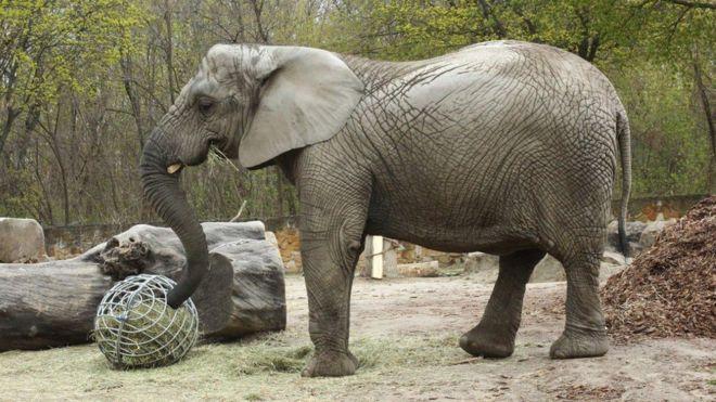 медицинская марихуана слоны