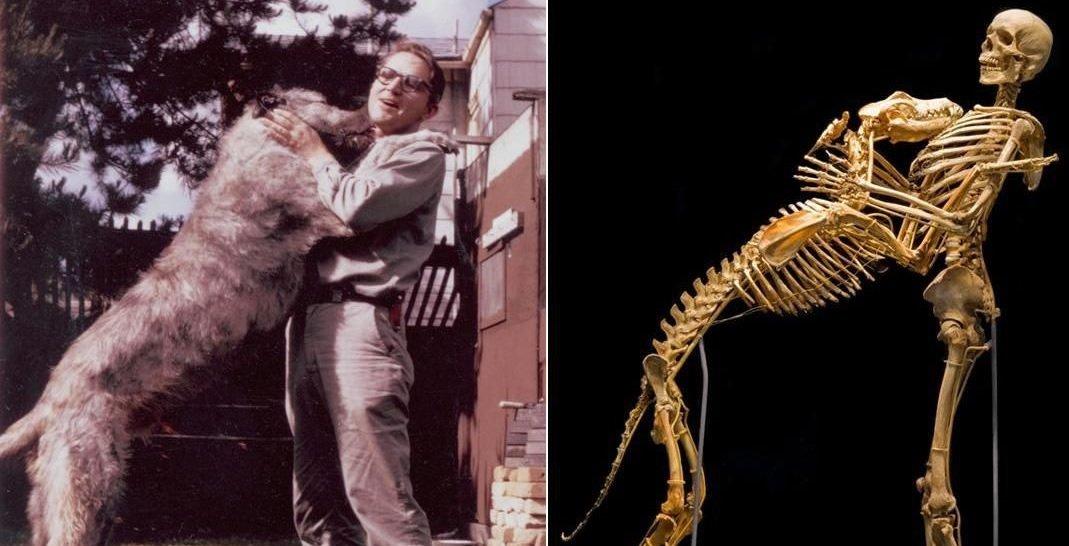 гровер кранц скелет собаки антрополог бигфут отвратительные мужики