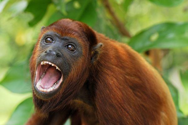 приматы обезьяны понедельник начинается с дичи