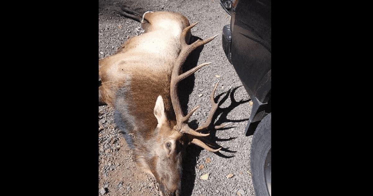 олень убил охотника отвратительные мужики
