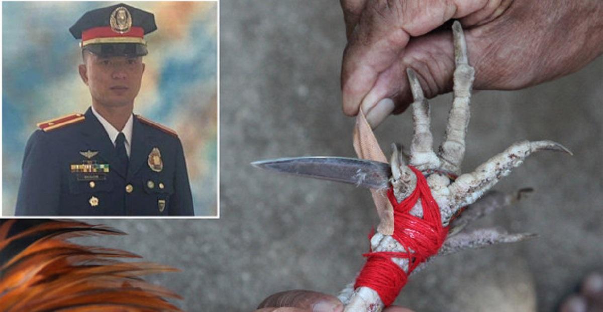 петушиные бои на филиппинах бойцовый петух убил полицейского