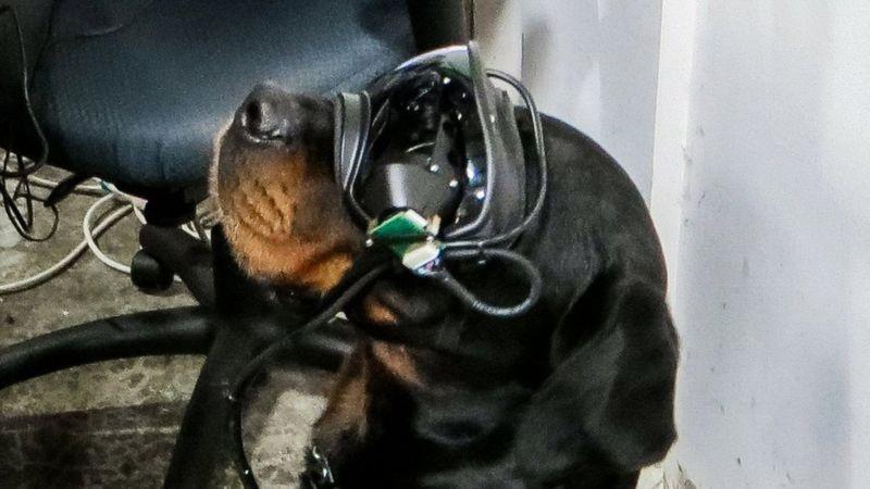 очки с дополненной реальностью для собак