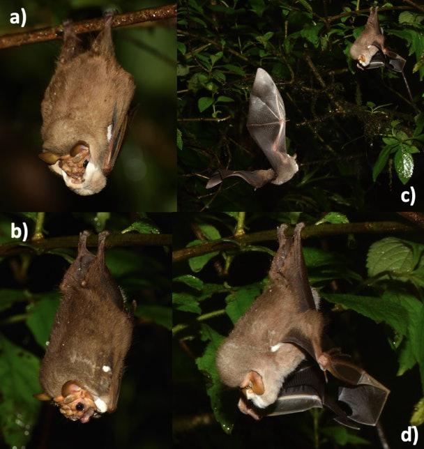 летучие мыши маски отвратительные мужики