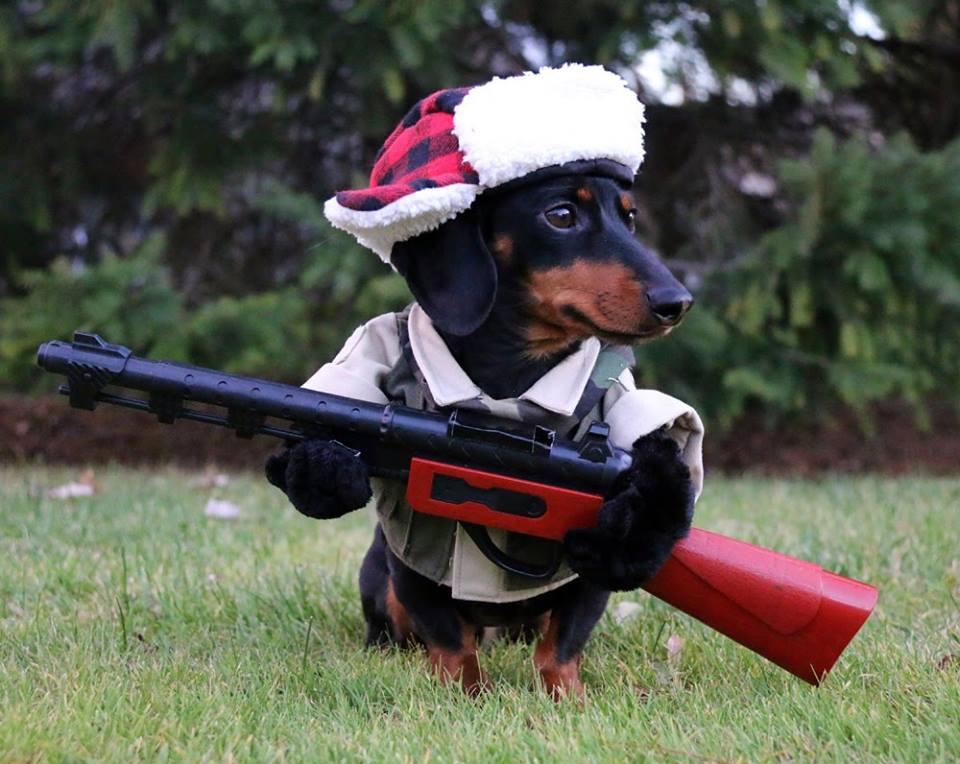 пес из техаса техасский пес с оружием отвратительные мужики