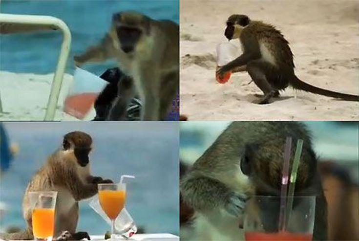 пьяные животные бухие животные отвратительные мужики