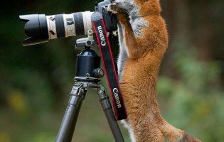 Тред шедевральной милоты: как любопытные животные мешают фотографам