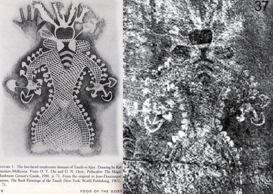 грибной шаман галлюциногенные грибы