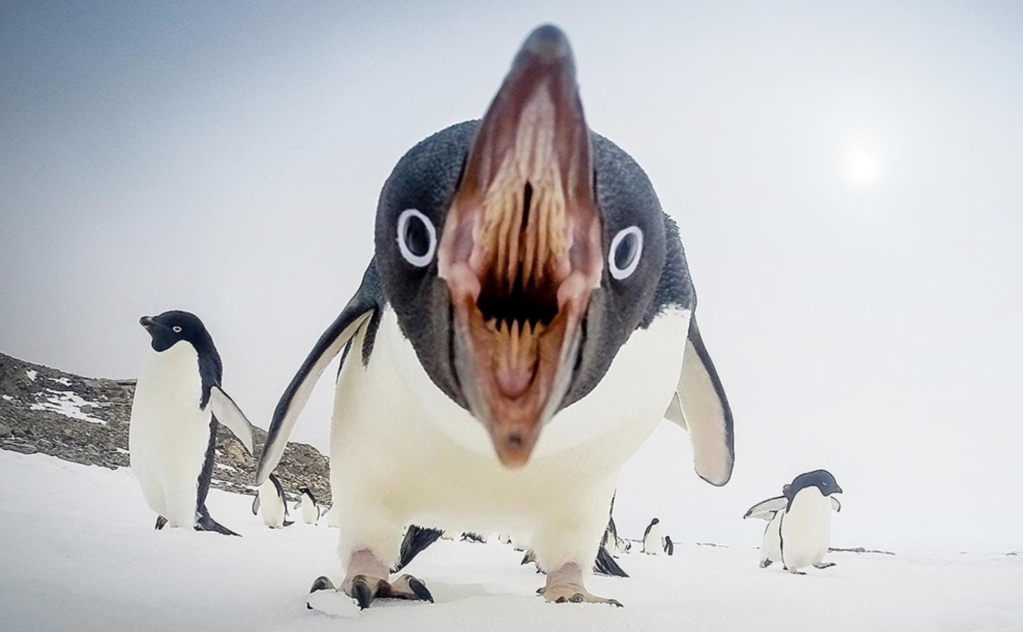 пингвины проституция безумные факты о пингвинах отвратительные мужики