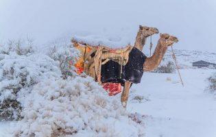 Фото: в Сахаре и Саудовской Аравии выпал снег — и это чертовски живописно