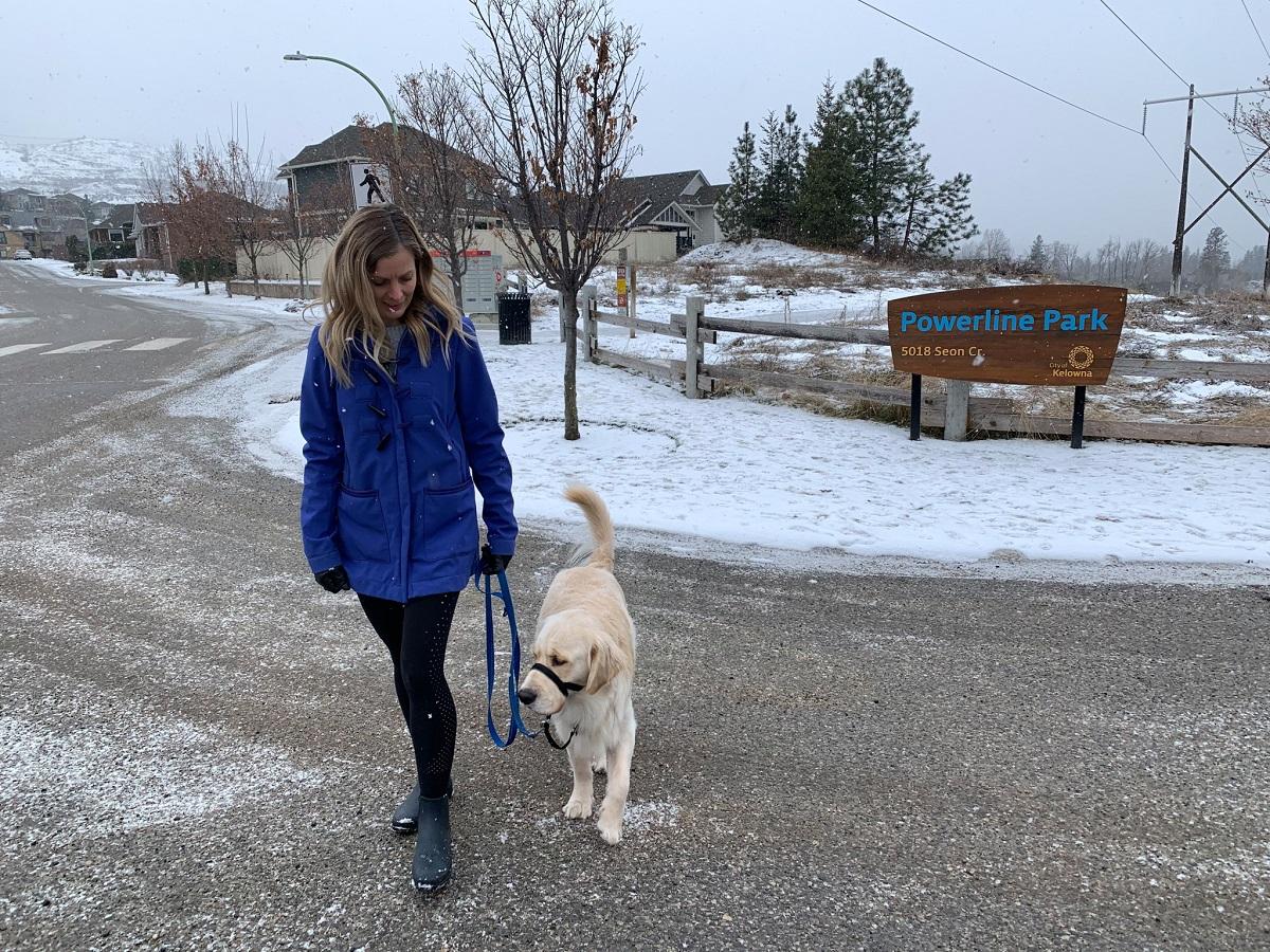упоротый пес канада