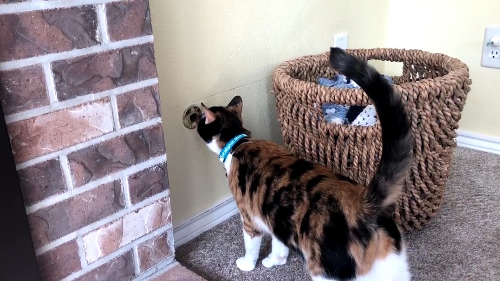 кот спас семью кот герой австралия отвратительные мужики