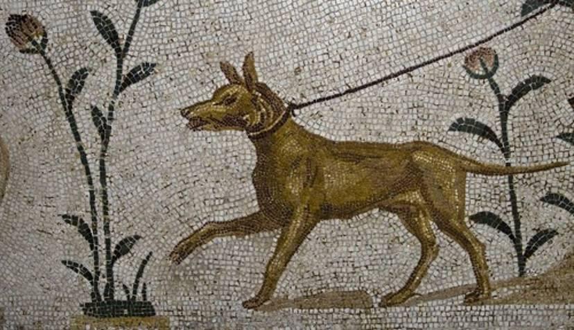 кладбище домашних животных домашние животные в древнем риме