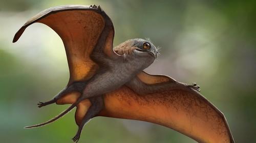 Sinomacrops bondei птерозавр покемон