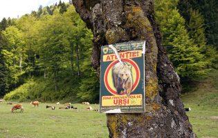 Принца Лихтенштейна подозревают в убийстве самого большого медведя Евросоюза