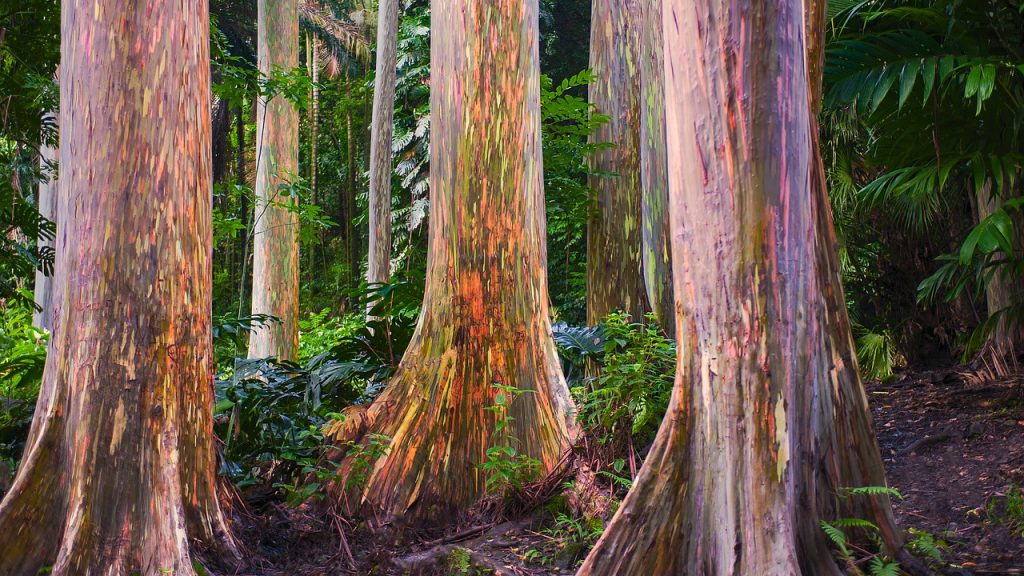 cannibal trees 05 1024x576 - Откуда берутся истории о растениях-людоедах и правдивы ли они