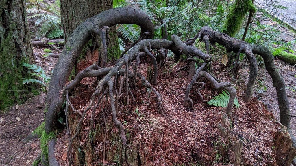 cannibal trees 06 1024x576 - Откуда берутся истории о растениях-людоедах и правдивы ли они
