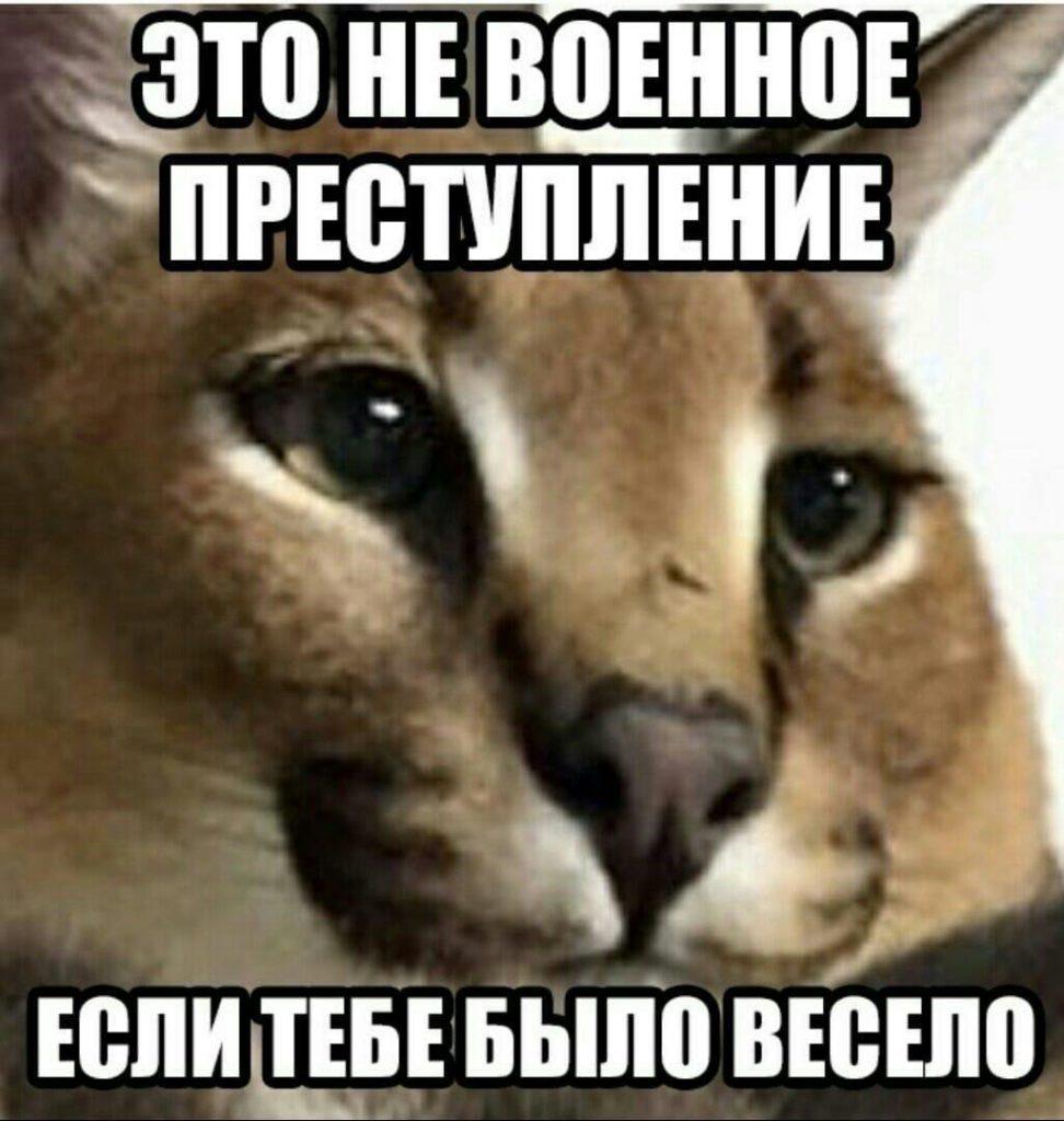 шлепа большой русский кот мем