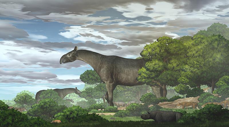 Самое большое животное в истории Paraceratherium Linxiaense гигантский носорог