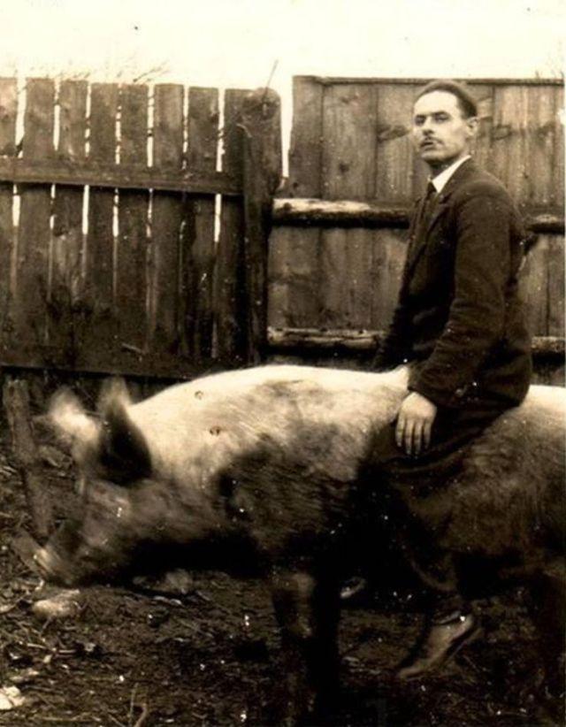 четыре всадника апокалипсиса гонки на свиньях
