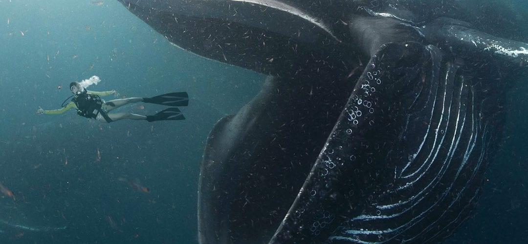 кит проглотил дайвера