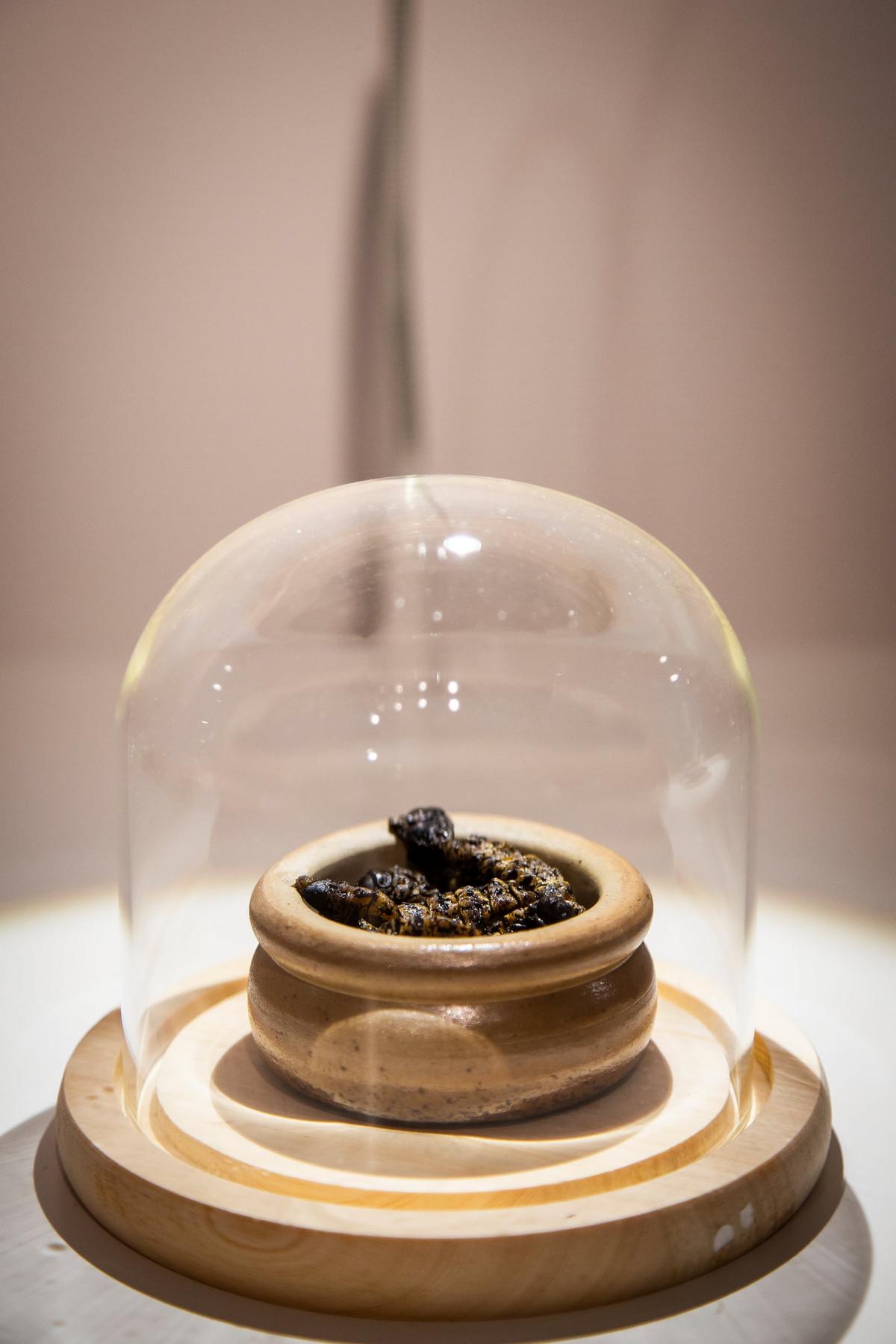disgusting food museum 5 - Пенис быка, жареные летучие мыши и корейское вино из кала: чем может порадовать музей отвратительной еды