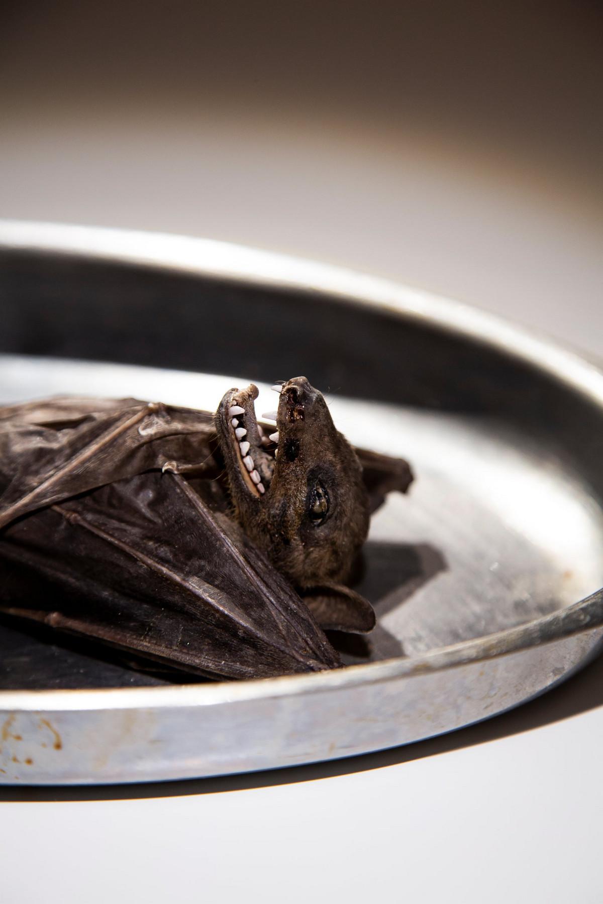 disgusting food museum 7 - Пенис быка, жареные летучие мыши и корейское вино из кала: чем может порадовать музей отвратительной еды