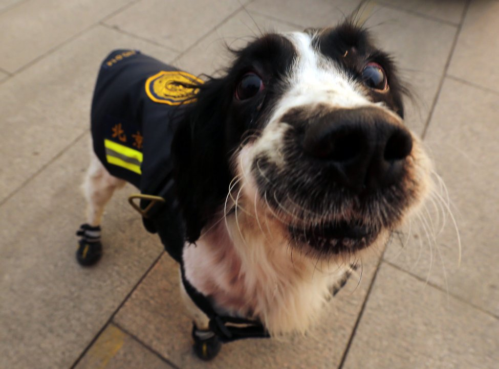 слишком добрые полицейские собаки китайская полиция