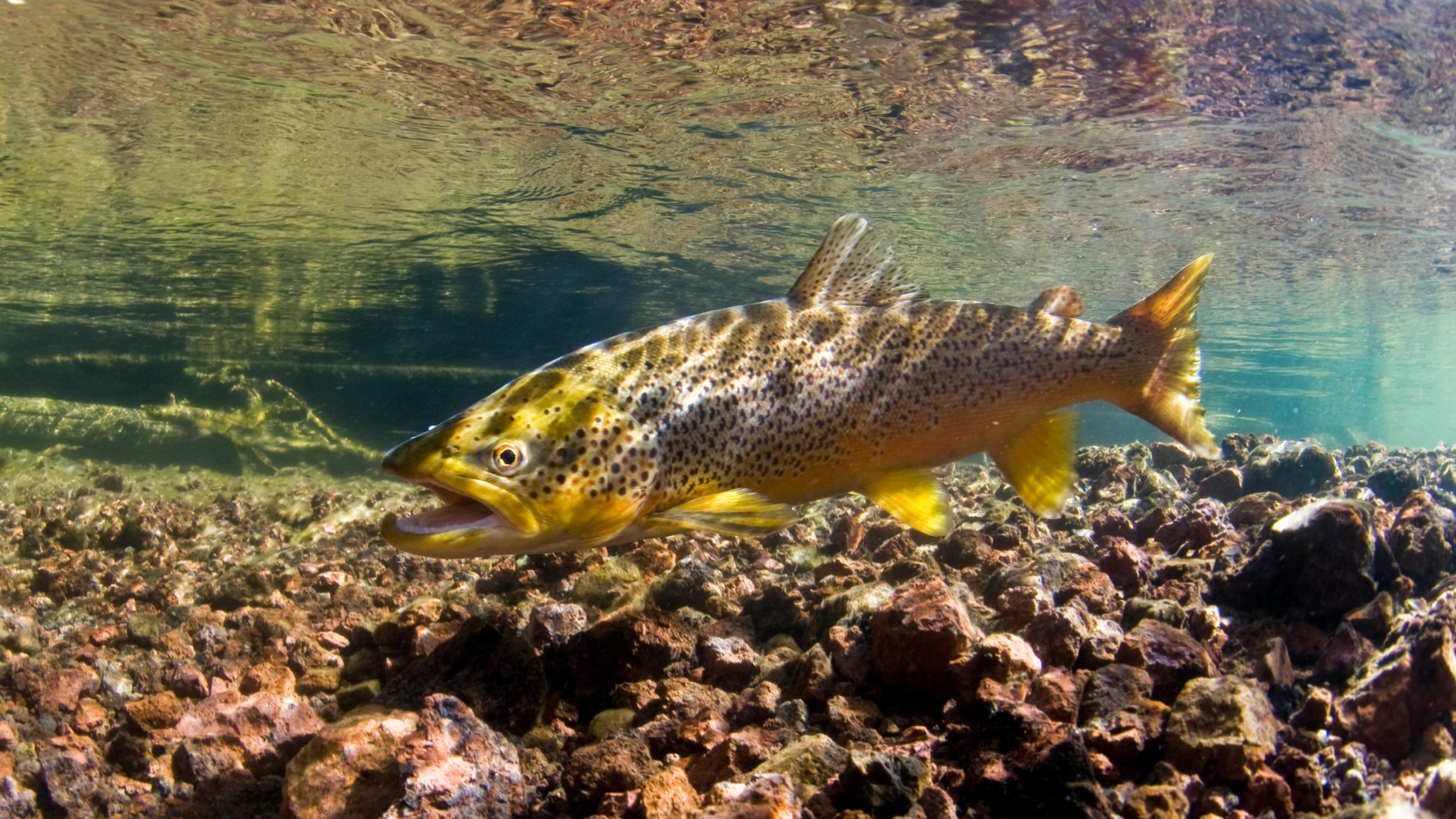 Рыба метамфетамин сточные воды