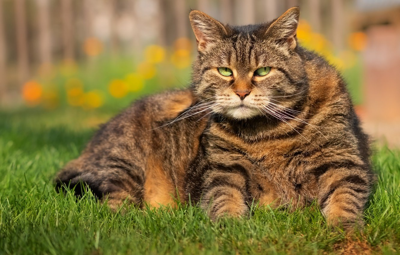 похороны кота закончились стрельбой