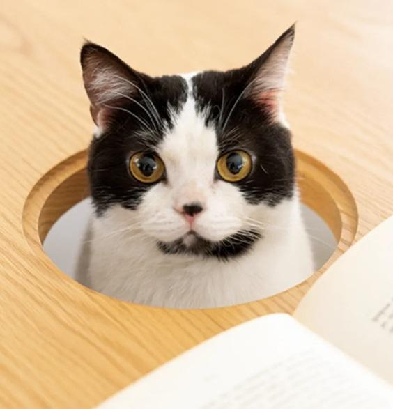 rfrf - В Японии выпустили стол с отверстием для кота — чтобы обедать вместе с питомцем