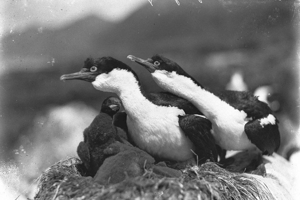 arctic expedition 14 1024x683 - Бравые «осси» во льдах: австралийская экспедиция в Антарктике 1911 года