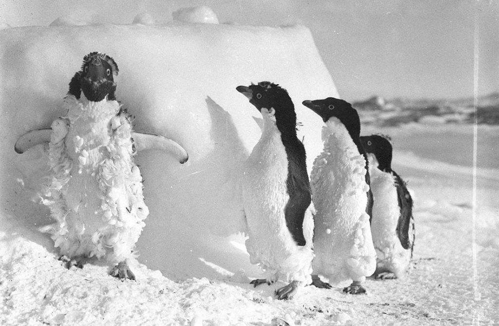 arctic expedition 17 1024x670 - Бравые «осси» во льдах: австралийская экспедиция в Антарктике 1911 года
