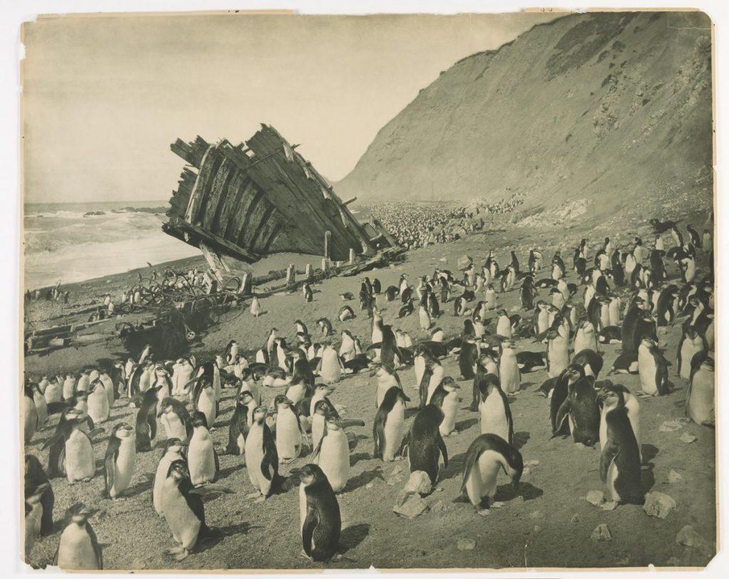 arctic expedition 2 1024x813 - Бравые «осси» во льдах: австралийская экспедиция в Антарктике 1911 года