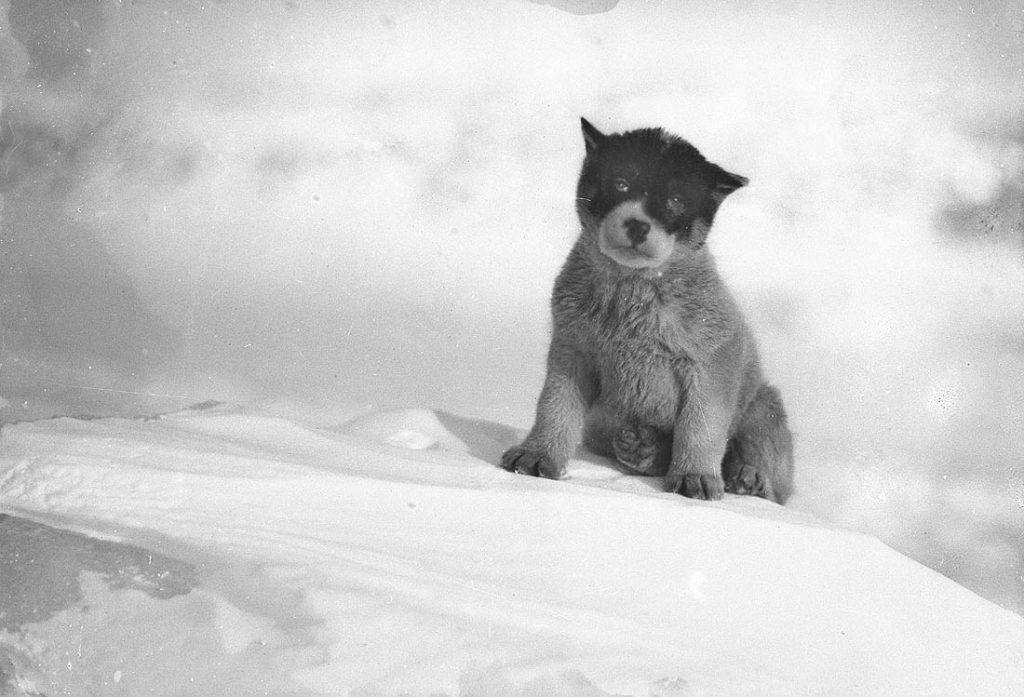 arctic expedition 20 1024x697 - Бравые «осси» во льдах: австралийская экспедиция в Антарктике 1911 года
