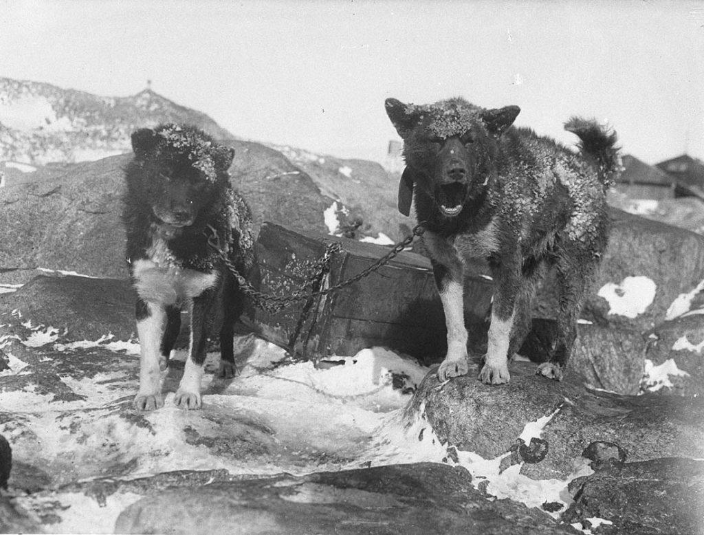 arctic expedition 27 1024x778 - Бравые «осси» во льдах: австралийская экспедиция в Антарктике 1911 года