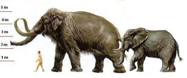 mammoth 3 - Американский стартап планирует возродить мамонтов. Проект уже собрал 15 миллионов долларов
